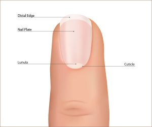 WHAT IS TOENAIL FUNGUS ON THE NAIL PLATE